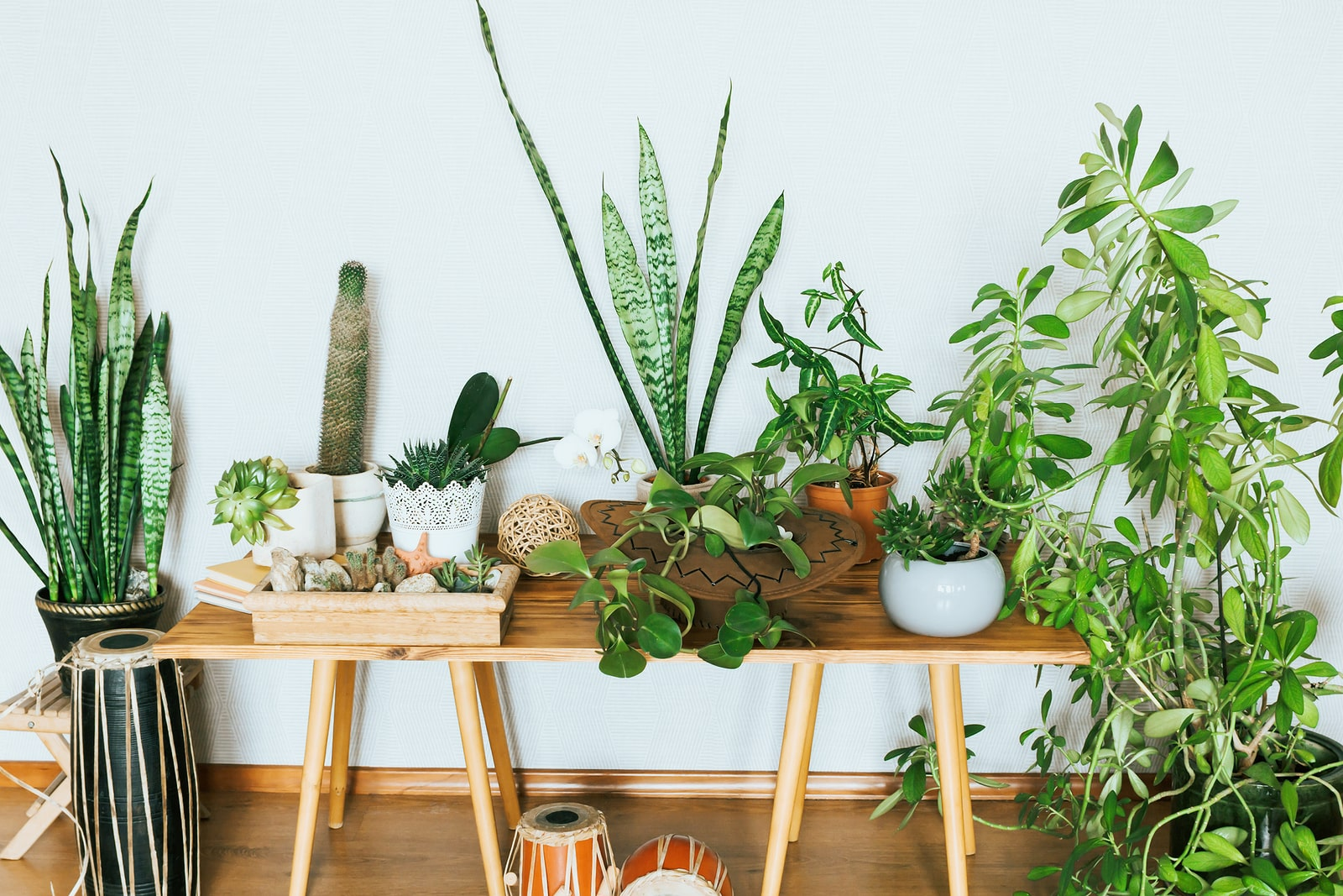 A huge collection of indoor plants in so many shapes and sizes.